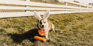 Easter Carrot Plush Dog Toy - 2 Pack